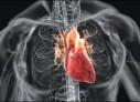 Inimile femeilor îmbătrânesc altfel decât inimile bărbaților